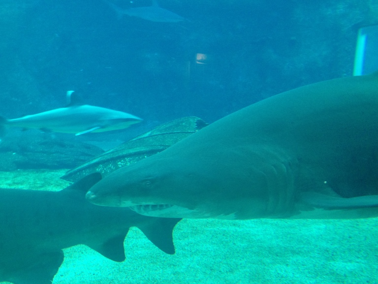 Shark tank at uShaka Marine World, Durban South Africa 2015